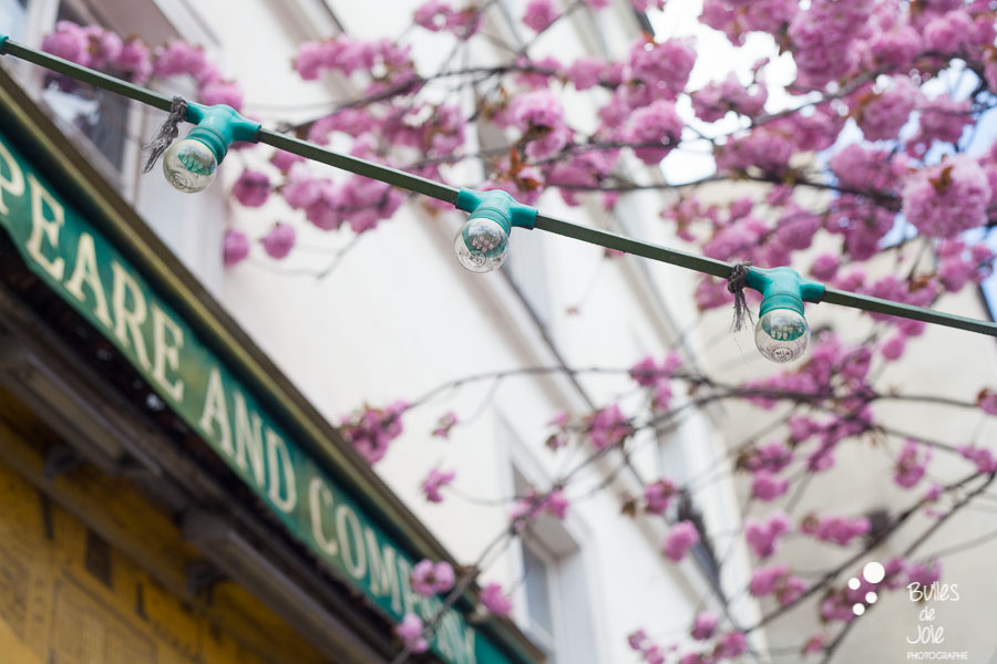 Cherry blossoms in front of the bookshop, Shakespeare and Company in Paris, France.