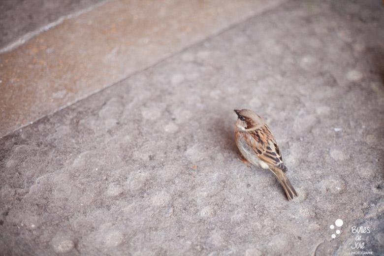 Small bird in Paris