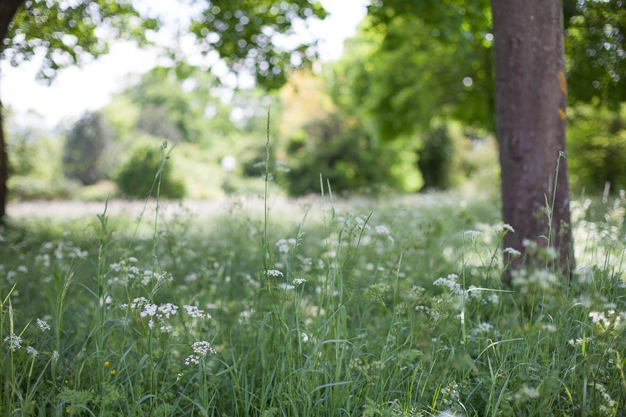 Idée de lieu champêtre pour une séance photo en famille